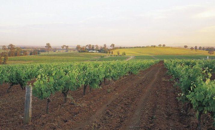 wine-trails-hunter-valley